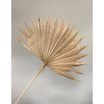 Liść palmy 55-60 cm natural