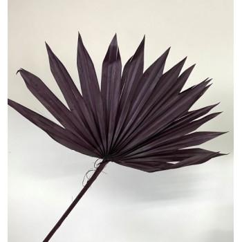 Liść palmy 55-60 cm bordo